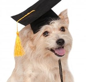 Rubies Costume Black Graduation Hat Pet Accessory