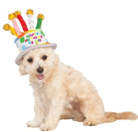 Rubies Costume Company 580410_S-M Birthday Cake Hat for Pet, Small-Medium