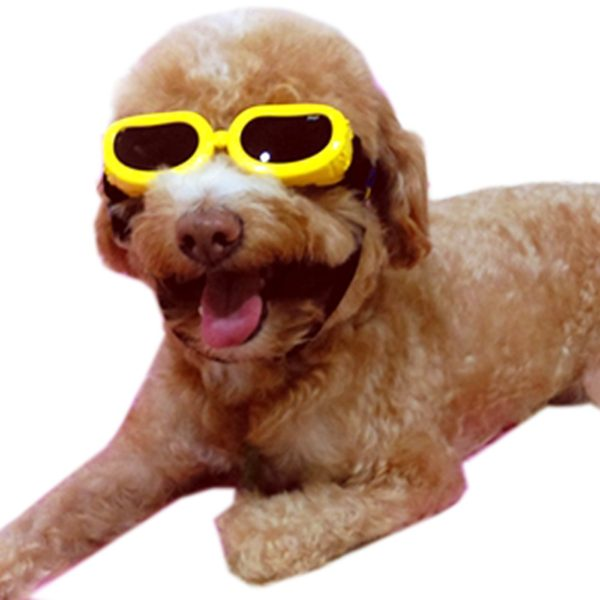 Alfie Pet by Petoga Couture - Larry Sun Glasses for Dogs and Cats - Color- Yellow, Size- XS