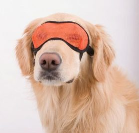 Doggles Mesh Eyewear, X-Small, Orange