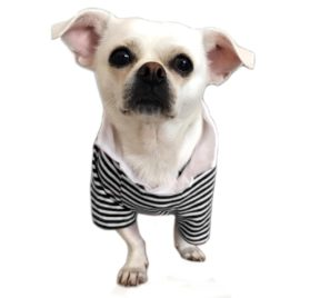 Alfie Pet by Petoga Couture - Jesse Striped Polo Shirt