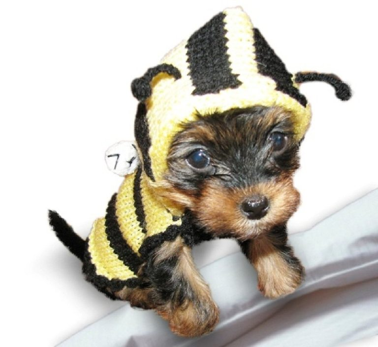 Bee Dog Sweater - Bumble Bee Dog costume coat - Hand knitted X Small dog clothes Medium Large - Different Sizes Available