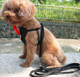 Alfie Pet by Petoga Couture - Hennie Step-in Harness and Leash Set 2