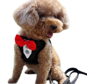 Alfie Pet by Petoga Couture - Hennie Step-in Harness and Leash Set