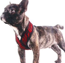 EXPAWLORER Choke Free Small Dog Vest X Frame Design with Soft Mesh, Puppy Adjustable Harness for Teacup Chihuahua Poodle Yorkshire Terrier