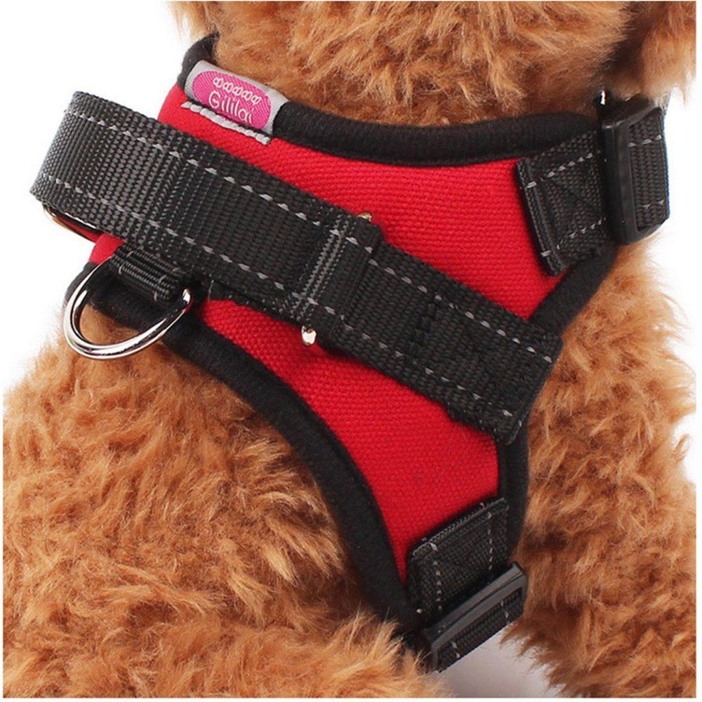 Best In Park Dog Collars