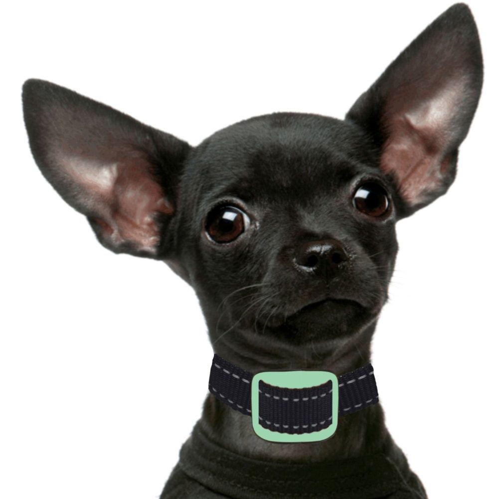 Anti Bark Collar For Small Dogs