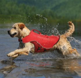 Kurgo Surf N Turf Dog Life Jacket - Lifetime Warranty 2