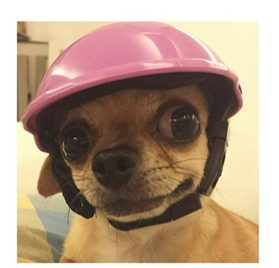 Diotem Funny Cool Pet Dog Riding Motorcycles Bike Helmet Cap Hat ABS Plastic Doggie Puppy Helmets Sun Rain Protection for Small Medium Cats Dogs 2