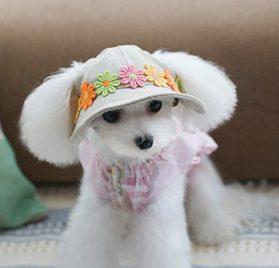 NUOLUX Flower Puppy Pet Chihuahua Sport Cap Bucket Hat Visor Sunbonnet 2
