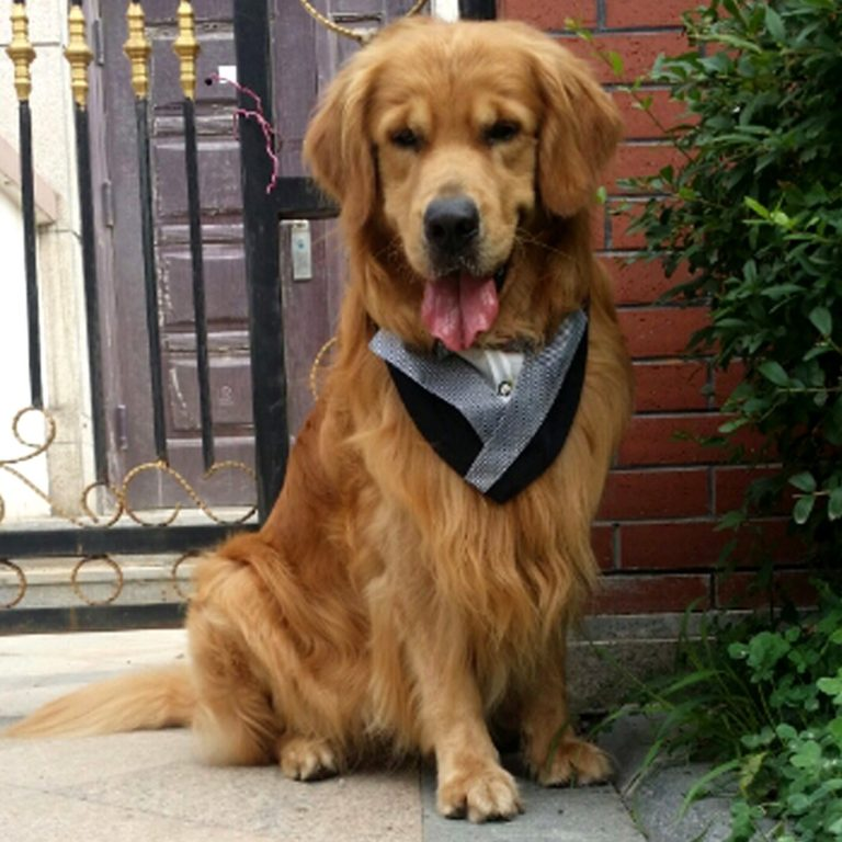 Alfie Pet by Petoga Couture - Barton Bandana for Dogs and Cats