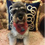 Alfie Pet by Petoga Couture - Cais Bandana 3-Piece Set for Dogs & Cats 4