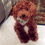 Alfie Pet by Petoga Couture - Cais Bandana 3-Piece Set for Dogs & Cats 9