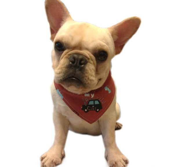 Alfie Pet by Petoga Couture - Cais Bandana for Dogs & Cats