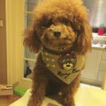 Alfie Pet by Petoga Couture - Cais Bandana for Dogs & Cats 8