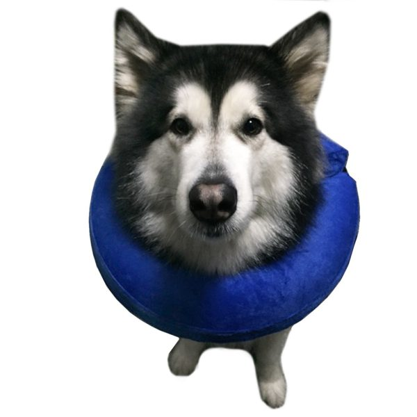 Alfie Pet by Petoga Couture - Carey Inflatable Recovery Collar (for Dogs and Cats)