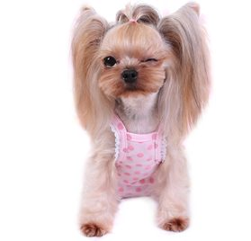 Alfie Pet by Petoga Couture - Frona Diaper Dog Sanitary Pantie with Suspender for Girl Dogs 2