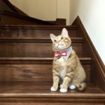 Alfie Pet by Petoga Couture - Morgan Bandana for Dogs and Cats 2