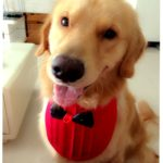 Alfie Pet by Petoga Couture - Nicolas Bandana for Dogs and Cats 2