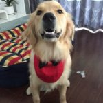 Alfie Pet by Petoga Couture - Nicolas Bandana for Dogs and Cats 3