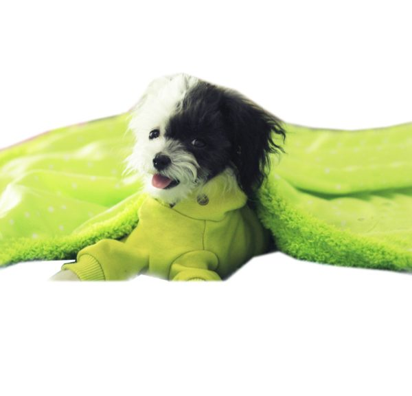 Alfie Pet by Petoga Couture - Nikki Blanket for Dogs and Cats - Color- Green