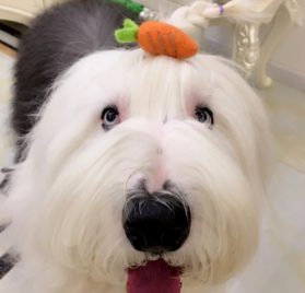 Alfie Pet by Petoga Couture - Pamela Hair Clip for Dogs, Cats and Small Animals 2