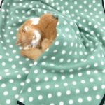 Alfie Pet by Petoga Couture - Quarry Fleece Blanket for Dogs and Cats