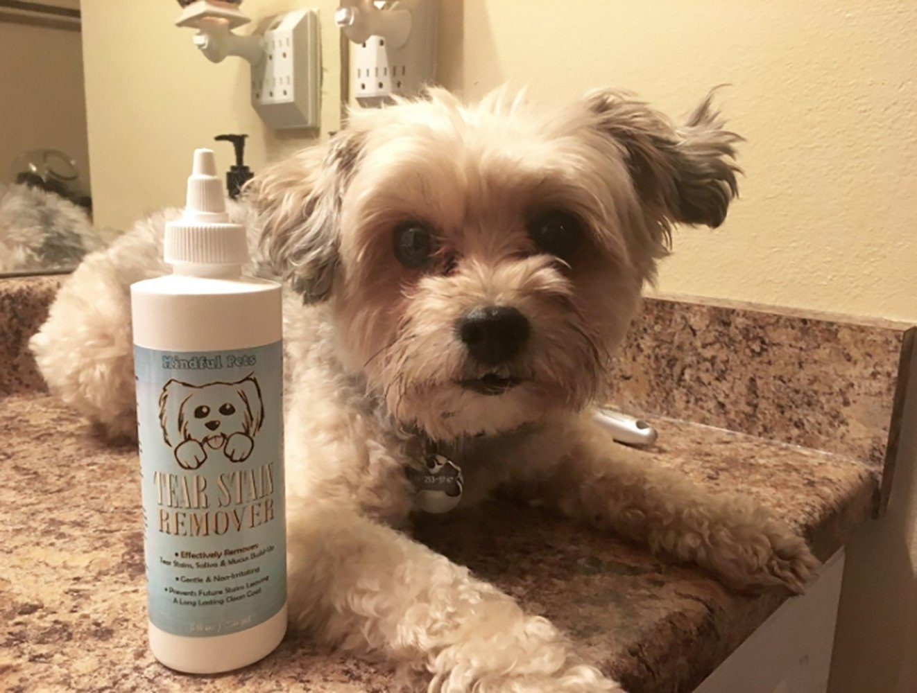 Mindful Pets Dog Tear Stain Remover 8oz Chihuahua Kingdom