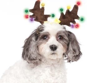 Rubies Costume Light Up Reindeer Antlers Dog Accessory 4