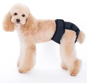 Alfie Pet by Petoga Couture - Max Diaper Dog Sanitary Pantie with Velcro Closure (for Girl Dogs)