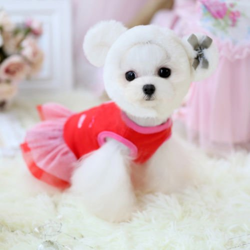 How To Make Baby Chihuahua Clothes