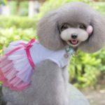 MaruPet Dog Daisy Gauze Tutu Dress Skirt Pet Dog Cat Princess Clothes Bowknot Dress 3