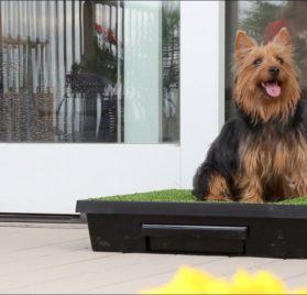PetSafe Pet Loo Portable Pet Potty 2