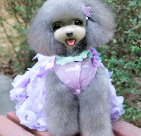 SMALLLEE_LUCKY_STORE Pet Small Dog Puppy Cat Clothes Coat Wedding Costume Satin Rose Formal Dress Tutu 2