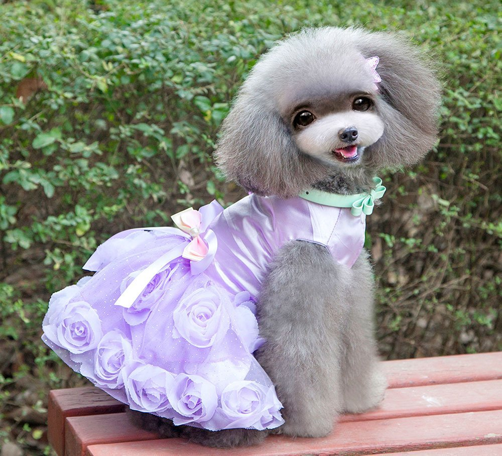 SMALLLEE_LUCKY_STORE Pet Small Dog Puppy Cat Clothes Coat