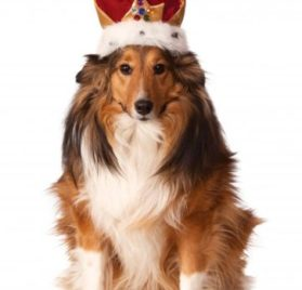 Rubies Costume Company King's Crown Pet Costume Accessory