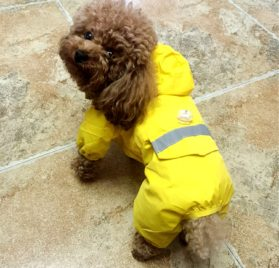 Alfie Pet by Petoga Couture - Willis Rainy Days Waterproof Raincoat (for Dogs and Cats) 2