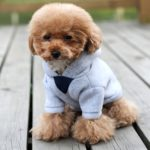 Alfie Pet by Petoga Couture - Wynna All-Season Hoodie 2