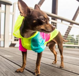 Neon Dog Jacket - Teacup, XXS, XS and Small Dog Clothes - Chihuahua and Yorkie Clothes 2