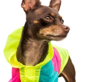 Neon Dog Jacket - Teacup, XXS, XS and Small Dog Clothes - Chihuahua and Yorkie Clothes