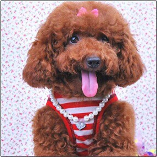 Petfavorites Fancy Pinky Crystal Heart Pet Cat Dog
