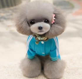 SELMAI Fleece Dog Coat Pattern Bear Small Puppy Chihuahua Clothes Dog Sweatshirts Blue XS 2