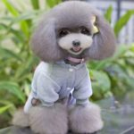 SELMAI USA Dog Jumpsuit Four-leg Pet Hoodies Puppy Coat Doggie Jacket Warm Clothes with Pants for Small Dogs Gray S 4