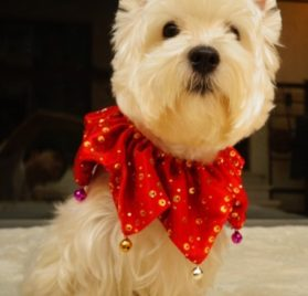 Bling Pet Holiday Accessories Dog Christmas Collar With Bells