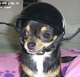 Doggie Bike or Motorcycle Helmet ~ XS Black 2