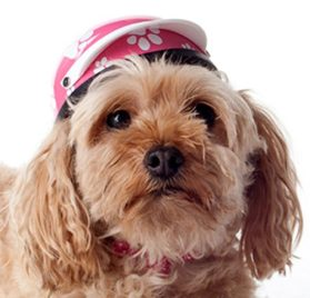 Helmets for Dogs, Cats, and All Small Pets - Pink Paws for small dogs 5-10 lbs