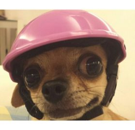 Pet Dog Motorcycles Bike Helmet Cap Yalatan Summer Dogs Hats for Small Dog Puppy Pet Outdoor Supplies Sports Dog Costumes Accessories for Dog 2