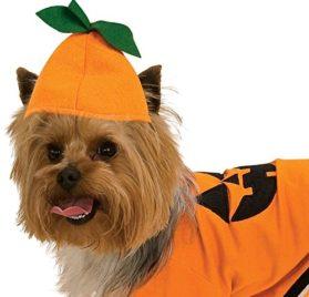 Pumpkin Dog Pet Costumes 2