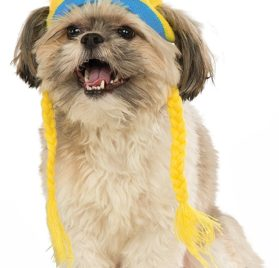 Rubies Costume Company Minion Bob Knit Dog Headpiece