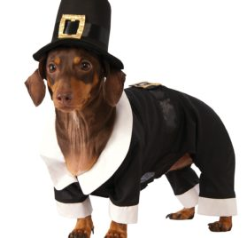 Rubie's Pilgrim Boy Dog Costume